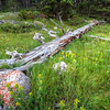Fallen tree and wildflowers along Cold Creek south of Spearfish Canyon