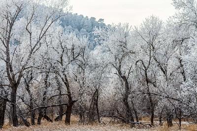 Frost near Ft. Meade