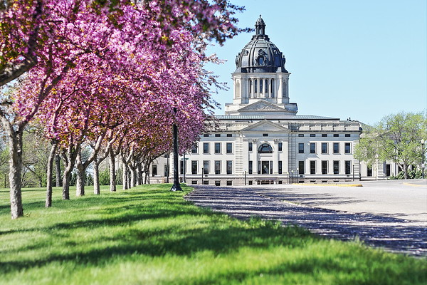 Trees in bloom near the Capitol in Pierre