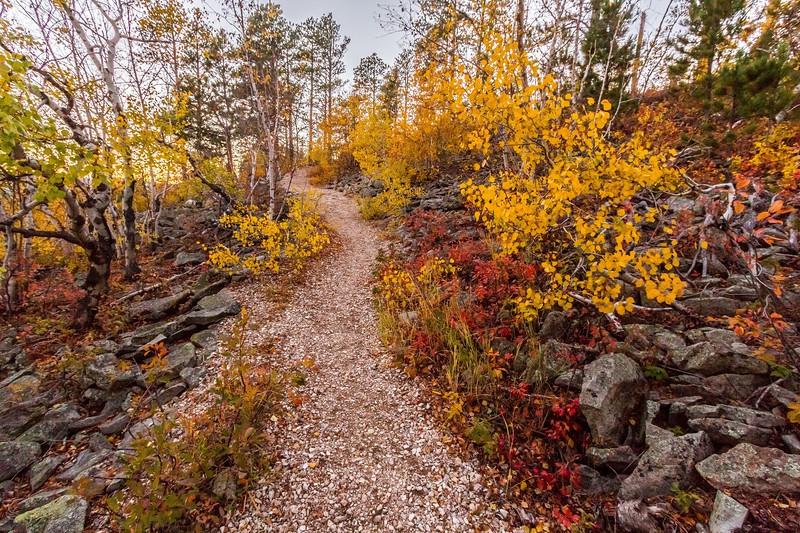 Trail on Mount Roosevelt near Deadwood