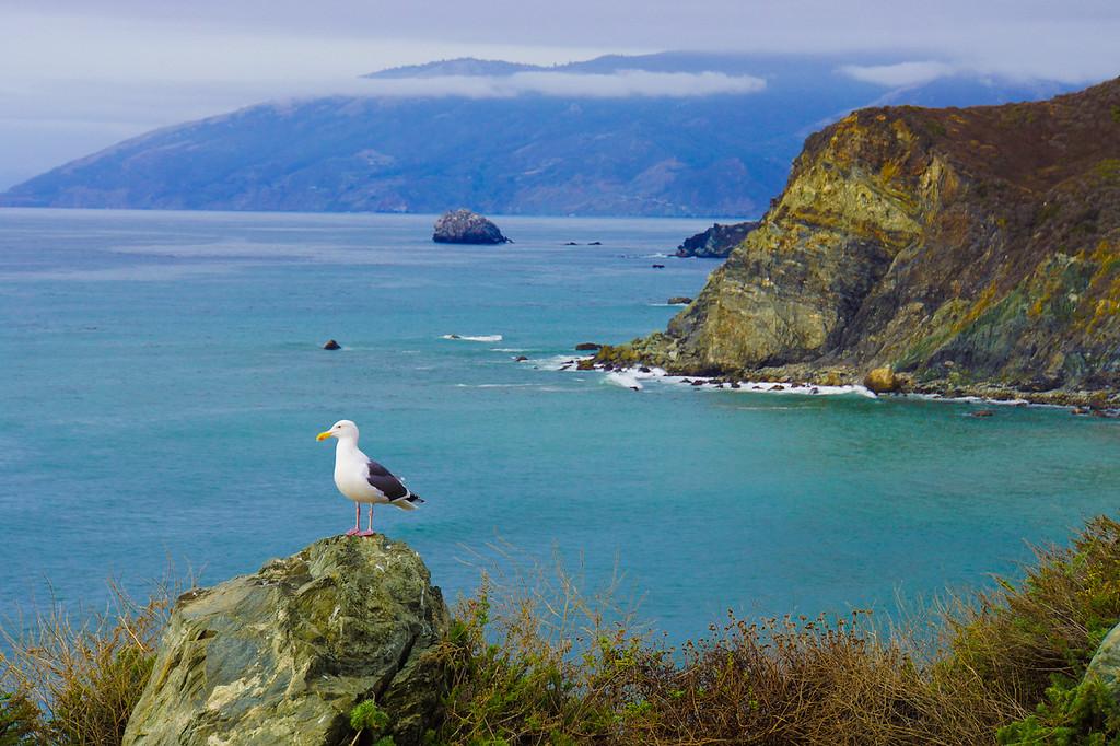 Pacific Coast Highway welcoming bird