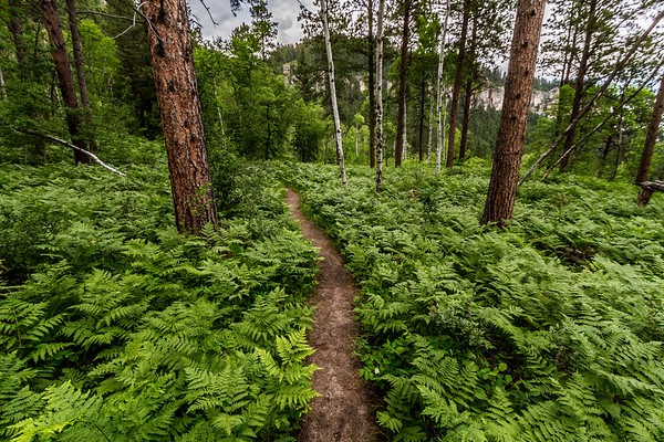 76' Trail in Spearfish Canyon