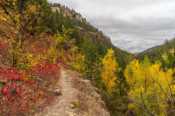 Autumn in the Black Hills