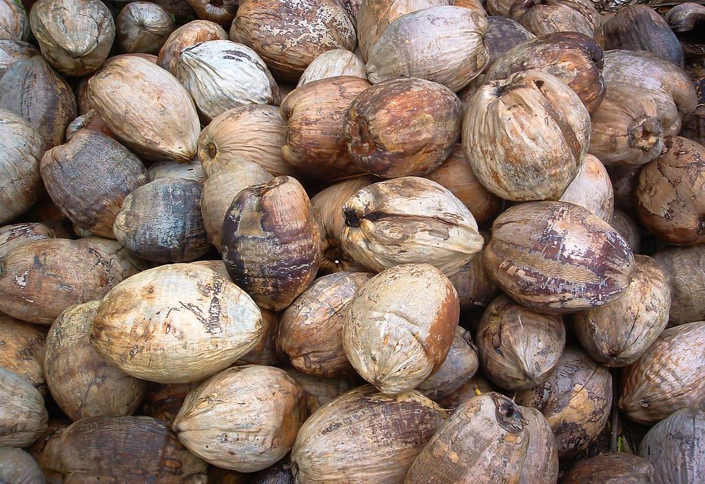 Fiji Coconuts