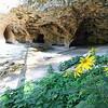 Flowers in bloom at Wildcat Caves (aka Community Caves)