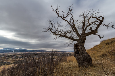 Tree on Lookout Mountain in Spearfish