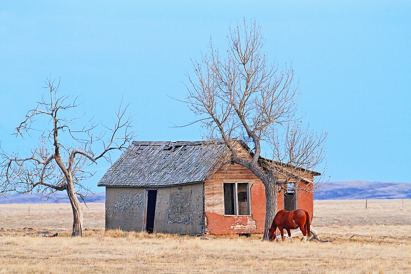 Abandoned house east of Rapid City
