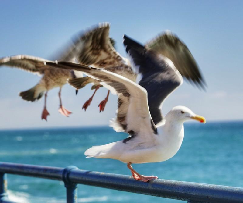 Pier birds