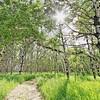 Pathways Spiritual Sanctuary south of Lead