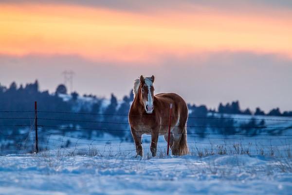 Horse near St. Onge
