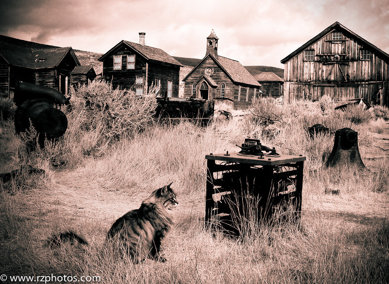 Ghost Town Cat