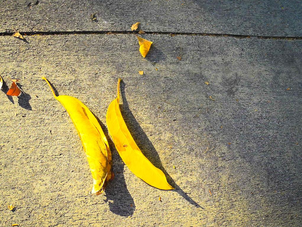 Key West leaves