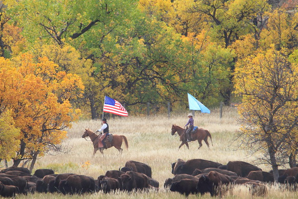 2017 Buffalo Roundup in Custer State Park