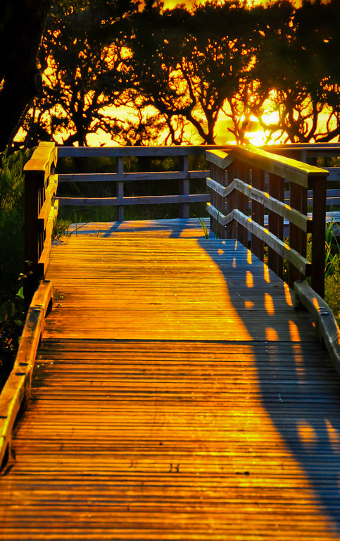 Outer Banks Walkway