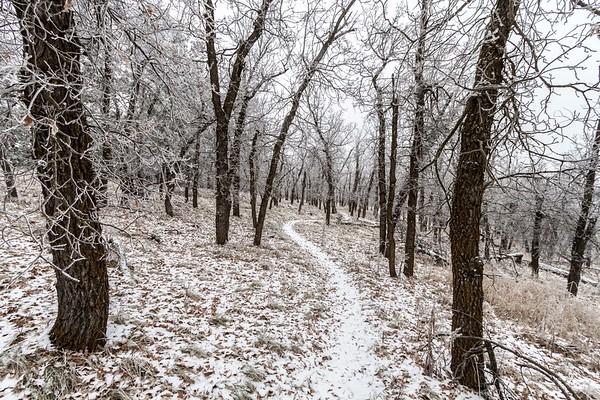 Centennial Trail near Ft. Meade