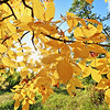 Fall colors in Spearfish