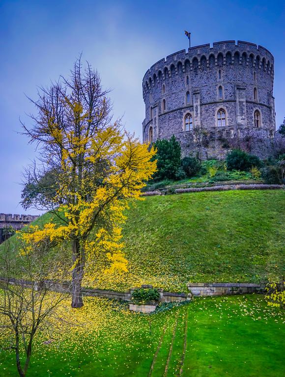 Windsor Castle tree