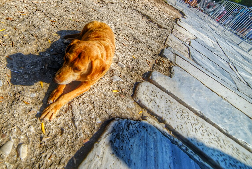Athens dog