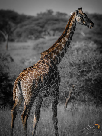 Tarangire National Park, Tanzania. Please Follow Me! https://tlt-photography.smugmug.com/