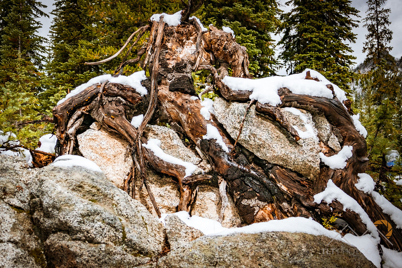 I just liked the contrast of colors in this stump  in the the Wallawas of Oregon. Please Follow Me! https://tlt-photography.smugmug.com/