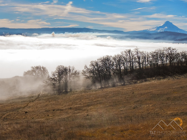 Mount hood above a sea of clouds over the Columbia River Gorge while mountain biking the Syncline trails. Please Follow Me! https://tlt-photography.smugmug.com/