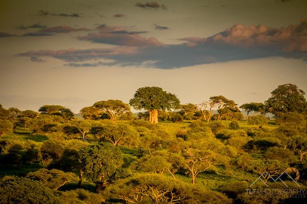 A huge Boabab tree in the distance from Tarangire Safari Lodge, Tanzania. Please Follow Me! https://tlt-photography.smugmug.com/