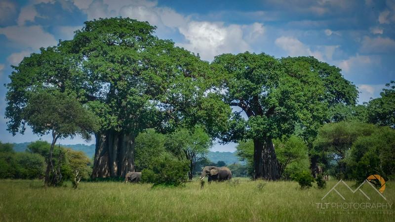 Tarangire National Park, Tanzania, Africa. Please Follow Me! https://tlt-photography.smugmug.com/