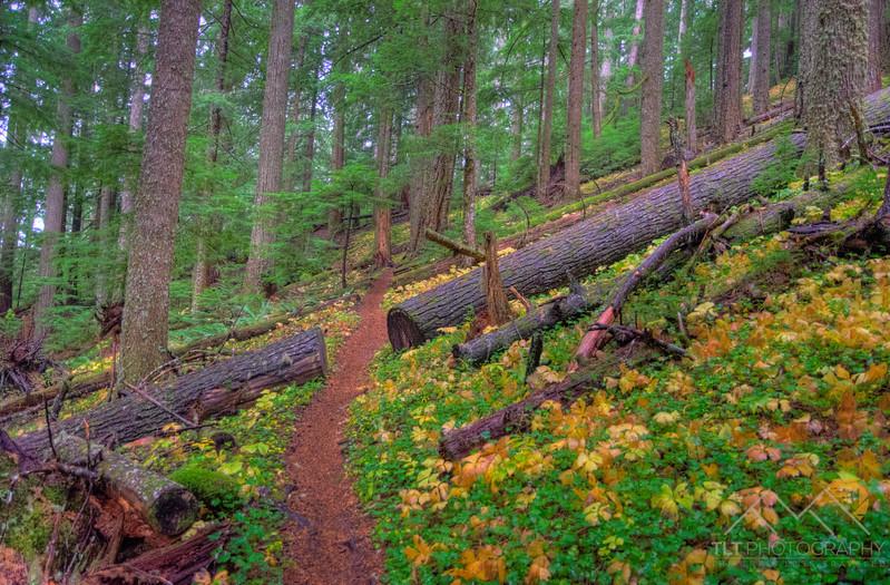 Mary's Peak trails outside of Corvallis, Oregon. Please Follow Me! https://tlt-photography.smugmug.com/