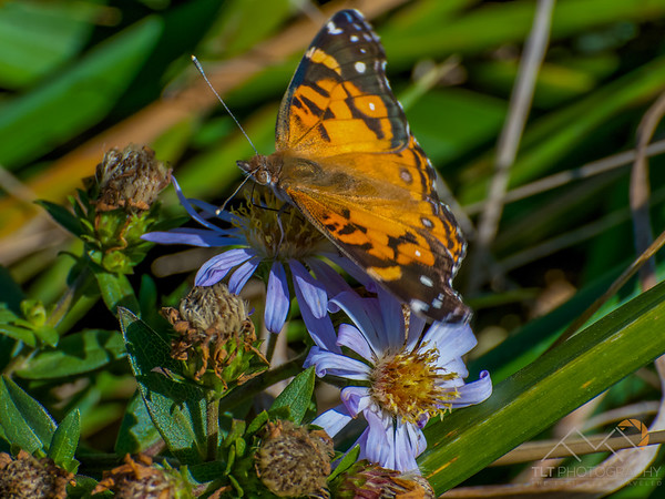 Butterfly on Cape Falcon at Oswald West State Park. Please Follow Me! https://tlt-photography.smugmug.com/