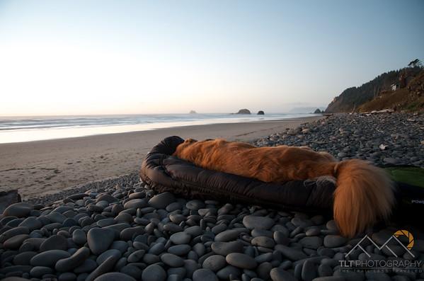 Leo preferred the comfort of my sleeping bag over the rocks so I obliged.  - Oregon Coast. Please Follow Me! https://tlt-photography.smugmug.com/