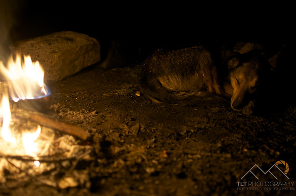 Tesla taking a rest after days of hiking in the Eagle Cap Wilderness.  She also loves eating sparks from the fire when she is awake. Please Follow Me! https://tlt-photography.smugmug.com/