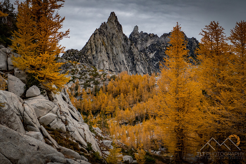 Prusik Peak in front of The Temple through golden Larches from Perfection Lake in the Enchantments of Washington. Please Follow Me! https://tlt-photography.smugmug.com/