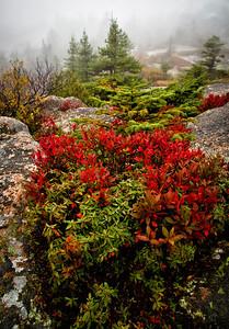 Foggy Morning on Cadillac Mountain Acadia National Park, Maine