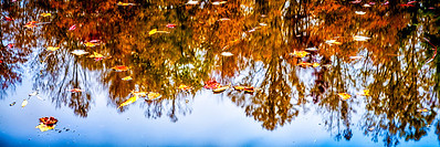 Reflections and Leaves