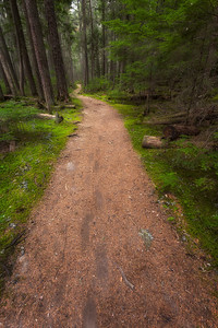 An Inviting Path Trail to McDonald Falls.   Looks like an enchanted forest.
