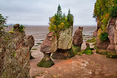 Hopewell Rocks Bay of Fundy, New Brunswick