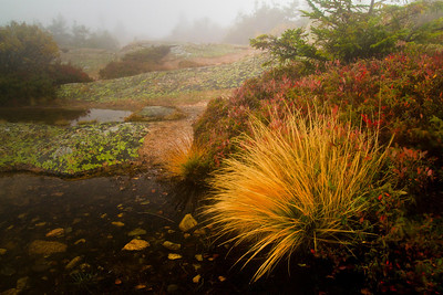Foggy Morning on Cadillac Mountain Acadia National Park, Maine