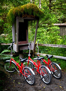 Gone To Find A Phone Hoh Rain Forest