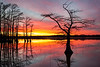 Reelfoot Lake : Landscapes and bird photos from Reelfoot Lake in West Tennessee.