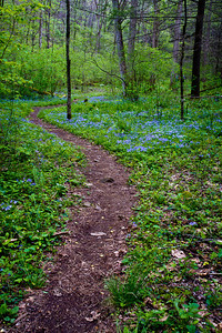 White Oak Sinks Spring Pathways
