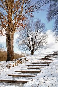 Snowy Steps