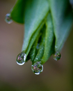 Dew Drops on Fern