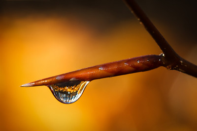 Golden Water Drop