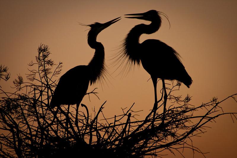 Dawn of Affection<br /> Wakodahatchee Wetlands, Delray Beach, FL<br /> First Place<br /> Applachian Photography Salon