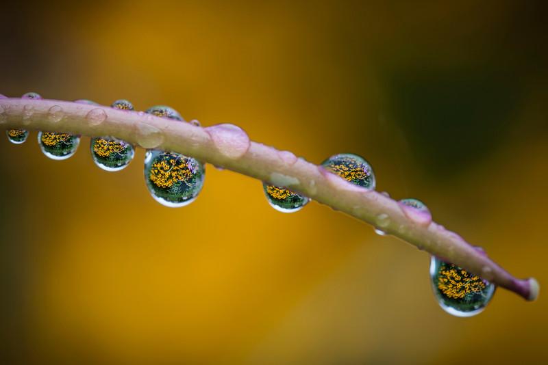 Flower Filled Waterdrops<br /> Centennial Park Nashville Tennessee