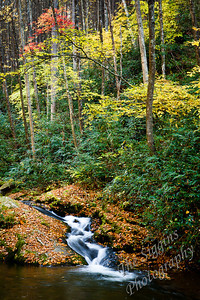 Quiet Fall Stream Max Patch, NC