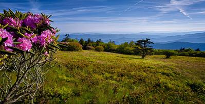 Roan Mountain Vista