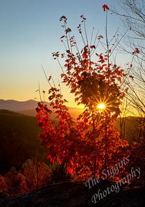 Sunset Through Maple