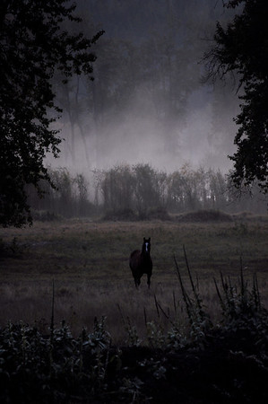 Turah Horse