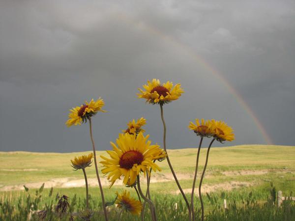 Flowers near Great Falls